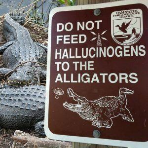 do not feed halucinogens