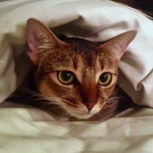 cat under covers photo by Andreas Komodromos
