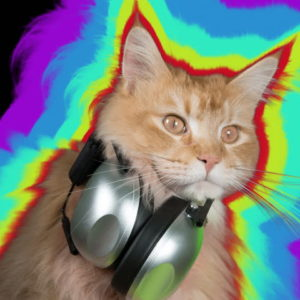 dj dance cat