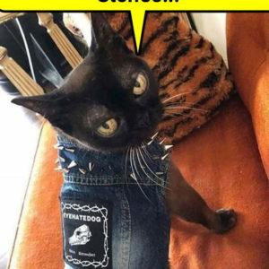 Catastrophe Cats
