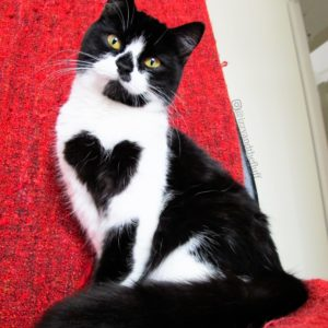cat with heart pattern on fur