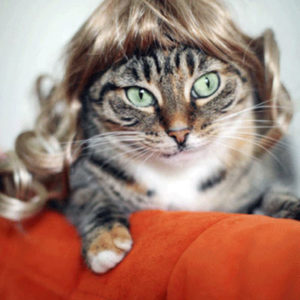 cat with blonde wig