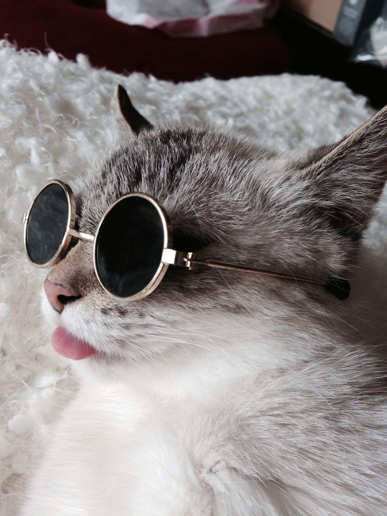 cat with dark sunglasses on
