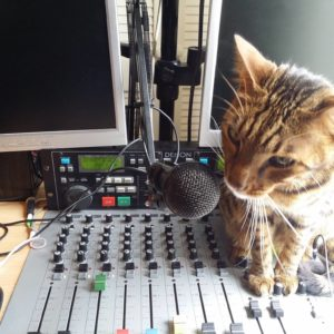 cat sitting on radio board next to microphone
